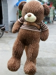 Gấu Teddy Johnny
